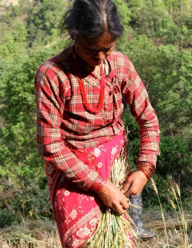 Nepalesische Frau bei der Farmarbeit